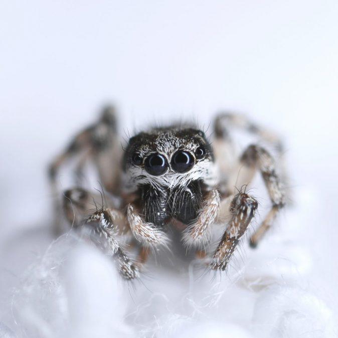 robots araña worpress
